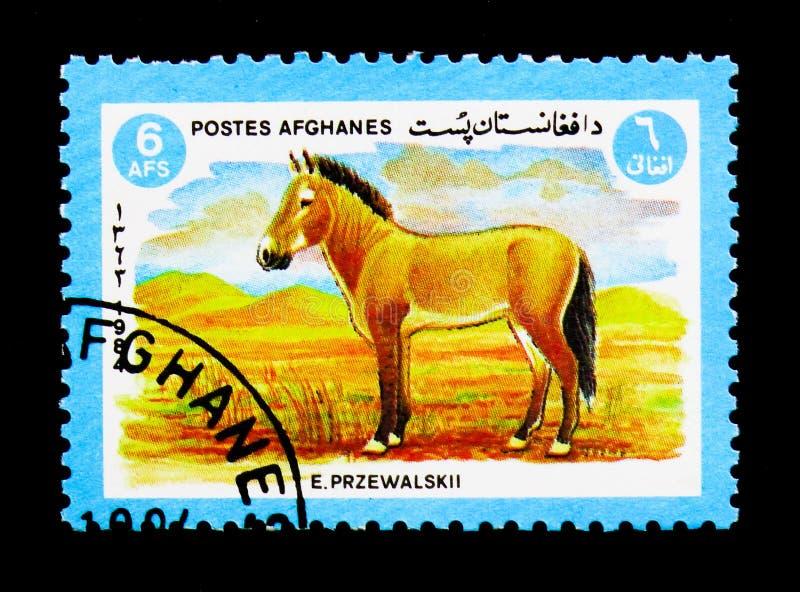 Przewalski \ 'cheval de s (przewalskii de ferus d'Equus), serie d'animaux, cercle image stock
