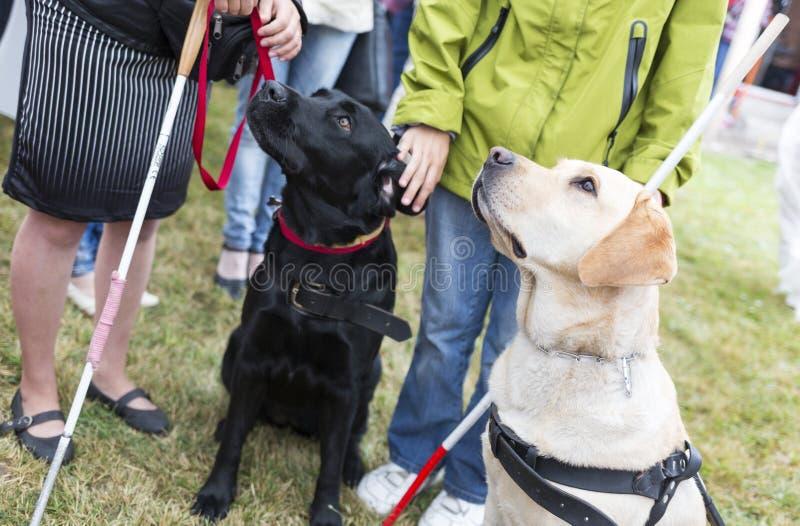 Przewdoników psy zdjęcie royalty free