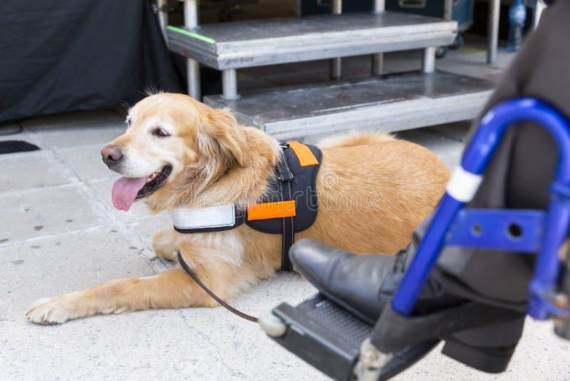 Przewdonik i pomoc pies obrazy stock