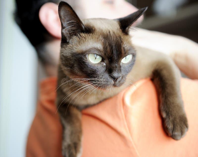 przewożenie ramię kot mężczyzna jego ramię fotografia stock
