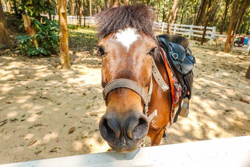 Przewodzi strzał brązu koń w fechtującym się padoku obraz stock