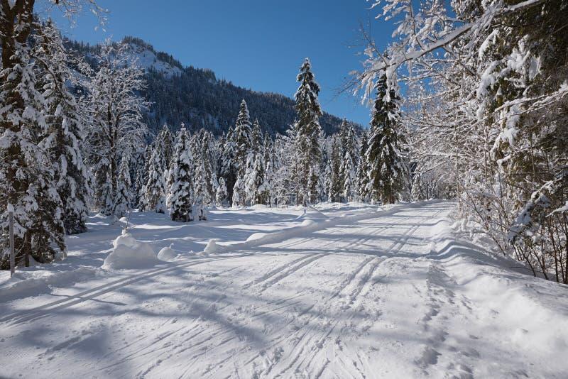 Przez cały kraj narta tropi blisko kreuth, górny bavaria obrazy stock