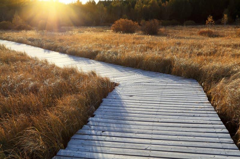 przez drewnianego footbridge bagna obrazy royalty free