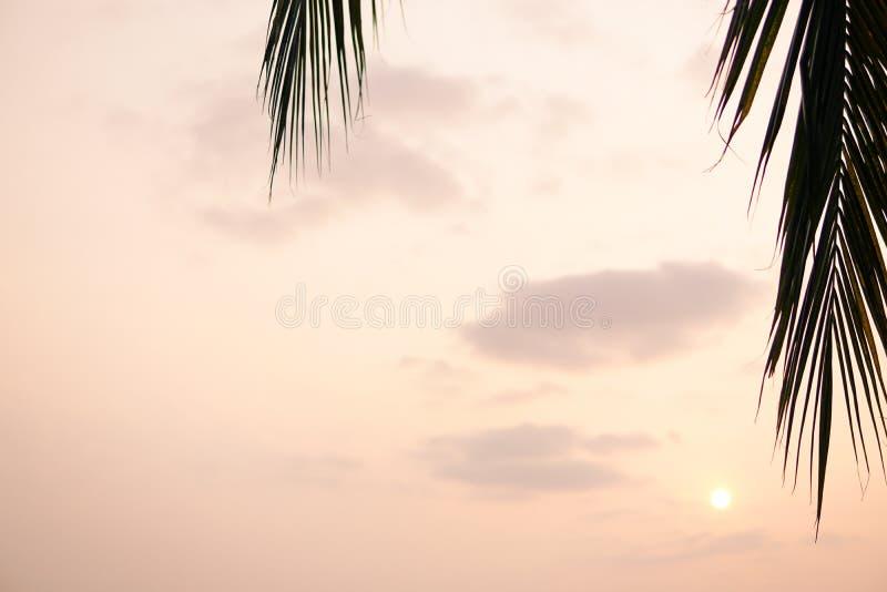 Przez drzewko palmowe liść słońca jaśnienie Pod zielonymi palmowymi liśćmi z światłem słonecznym fotografia royalty free