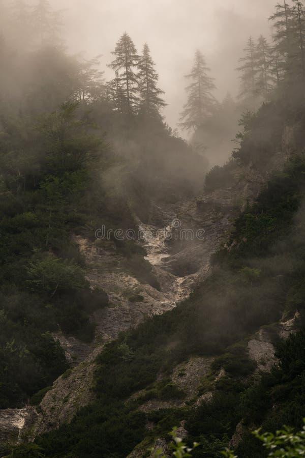 Przez mgły obrazy royalty free