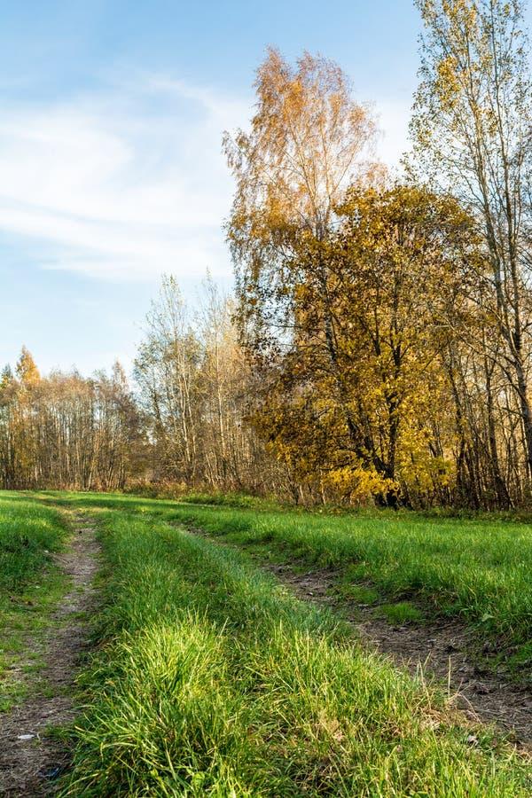 Przez wiejskie drogowe przepustki zielenieją pole, drzewa z żółtym pomarańczowym ulistnieniem, jesień krajobraz obrazy royalty free