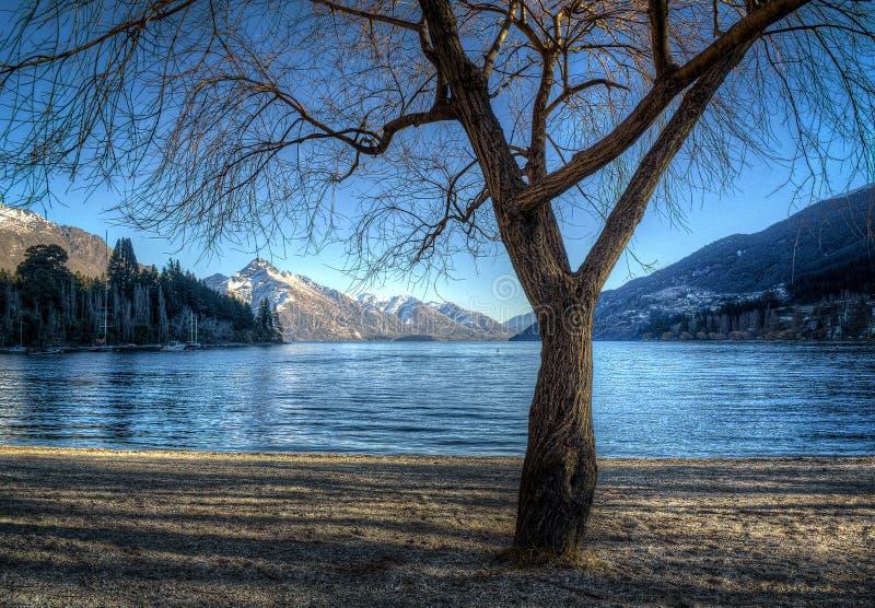Przy brzeg jeziora zima drzewo zdjęcie stock