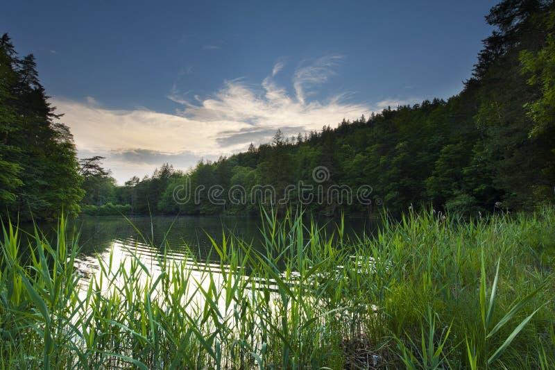Przy jeziorem zmierzchu nastrój wewnątrz midden drewniany i las w fotografia royalty free