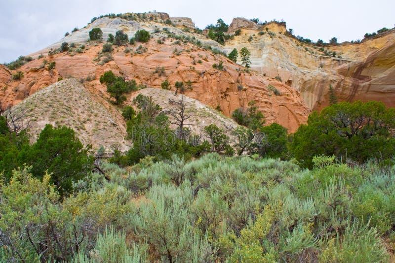 Przy widokiem Echowy amfiteatr w Carson lesie państwowym w Nowym - Mexico fotografia royalty free
