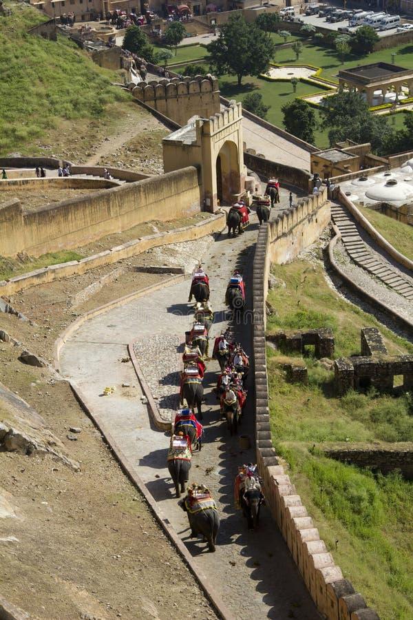 Przy Złocistym Fortem słoń Przejażdżka Jaipur, India zdjęcia royalty free