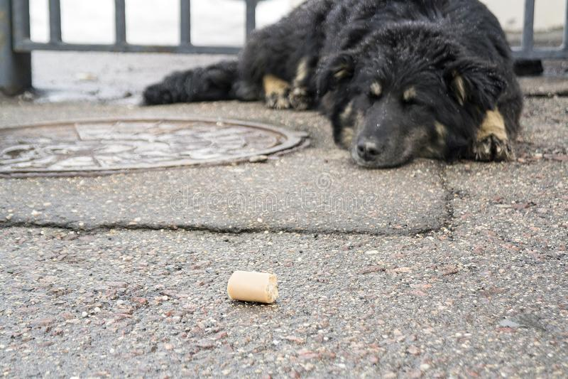 Przybłąkanego psa dosypianie na ulicie zdjęcie stock