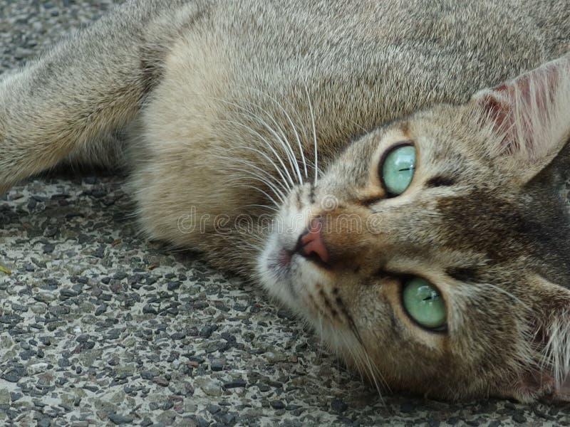 Przybłąkanego kota zieleni oczy obrazy stock