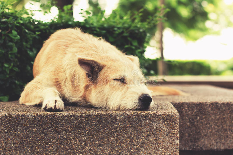 Przybłąkanego psa dosypianie przy parkiem Rocznika skutka brzmienie obrazy royalty free