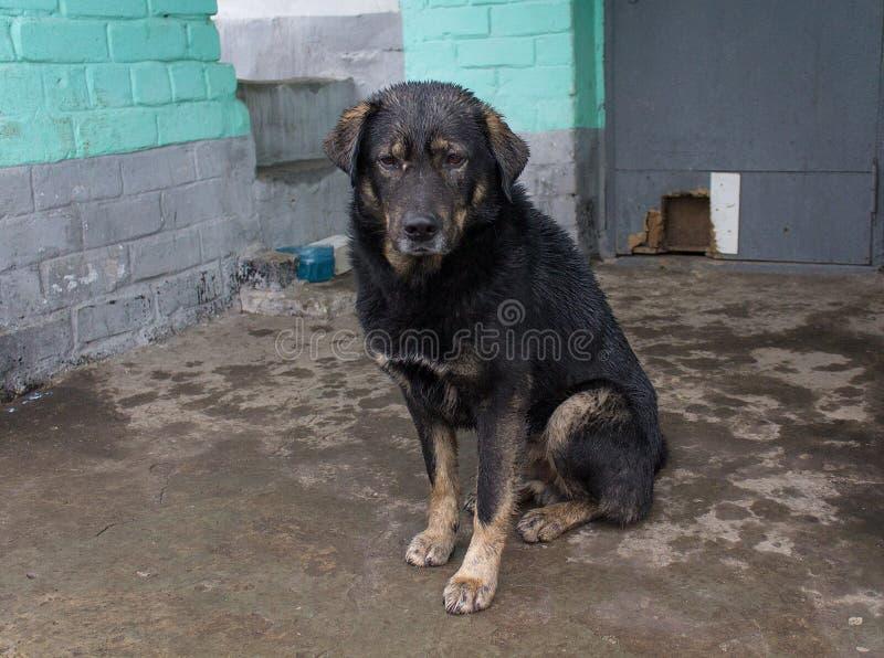 Przybłąkanego psa kryjówka od deszczu obrazy royalty free