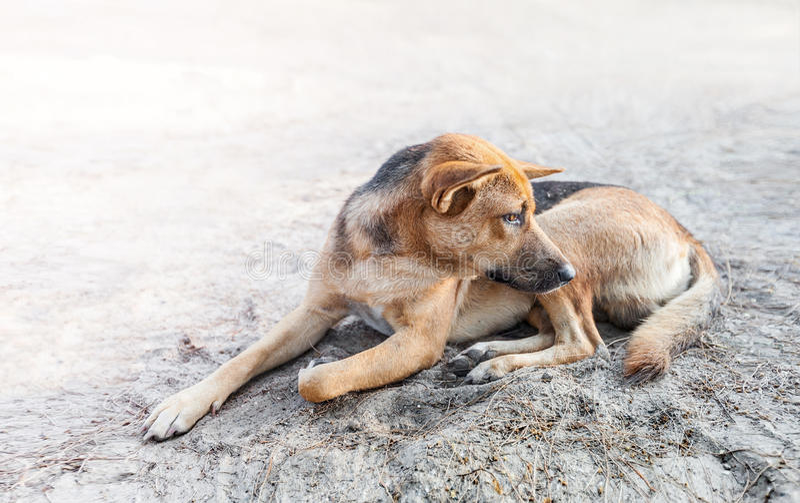 Przybłąkanego psa sen na chodniczku fotografia stock
