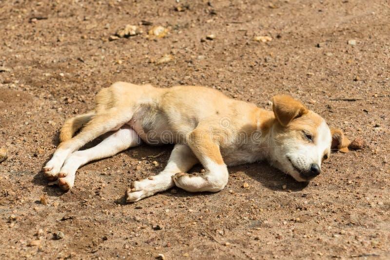 Przybłąkanego psa szczeniak fotografia royalty free