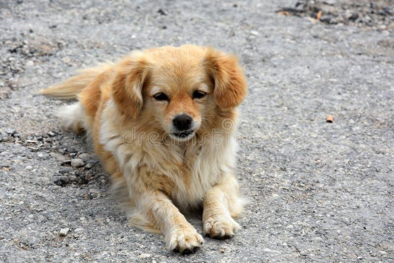 Przybłąkanego psa szczeniak zdjęcie royalty free