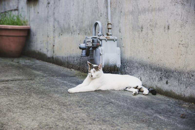 Przybłąkany biały kot kłaść w alei w ciągu dnia fotografia stock