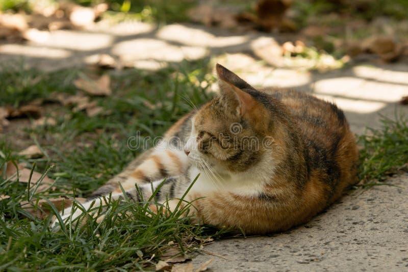 Przybłąkany cycowego kota lying on the beach na swój stronie na trawie, fotografia stock