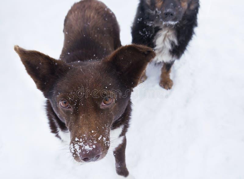 Przybłąkany Głodny pies zdjęcia stock