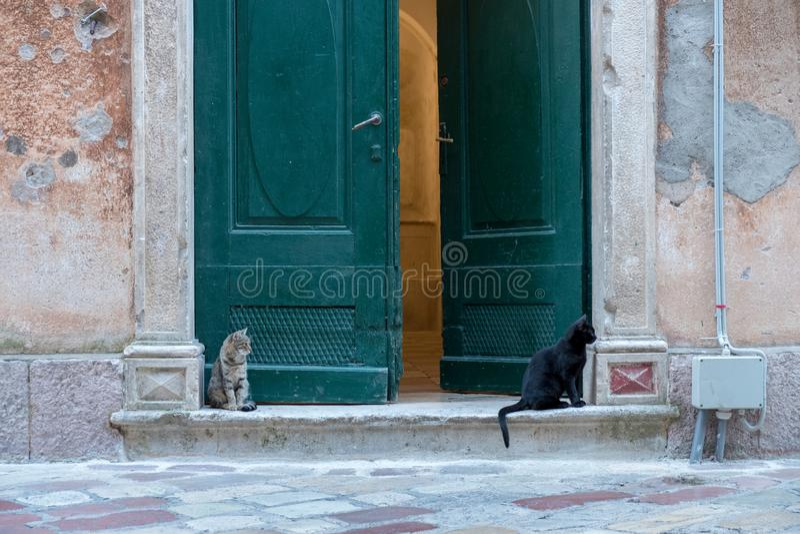 Przybłąkany kotów odpoczywać zdjęcia royalty free