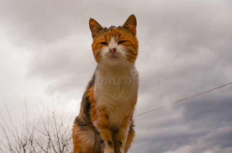 Przybłąkany kot obrazy stock