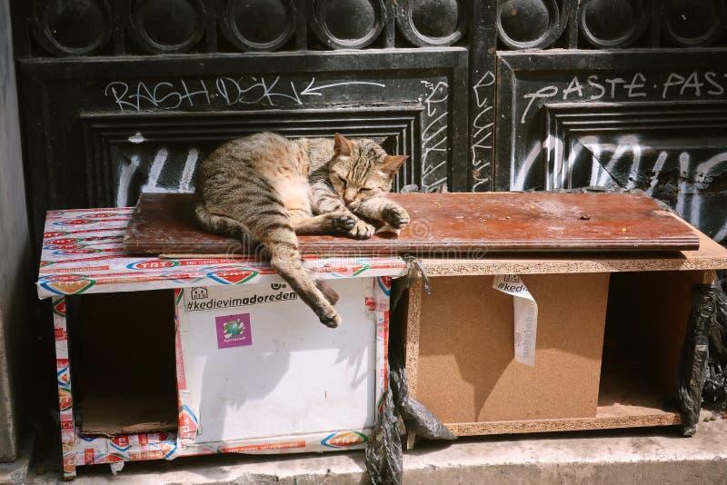 Przybłąkany kot jest odpoczynkowy na kota domu na ulicie zdjęcie royalty free