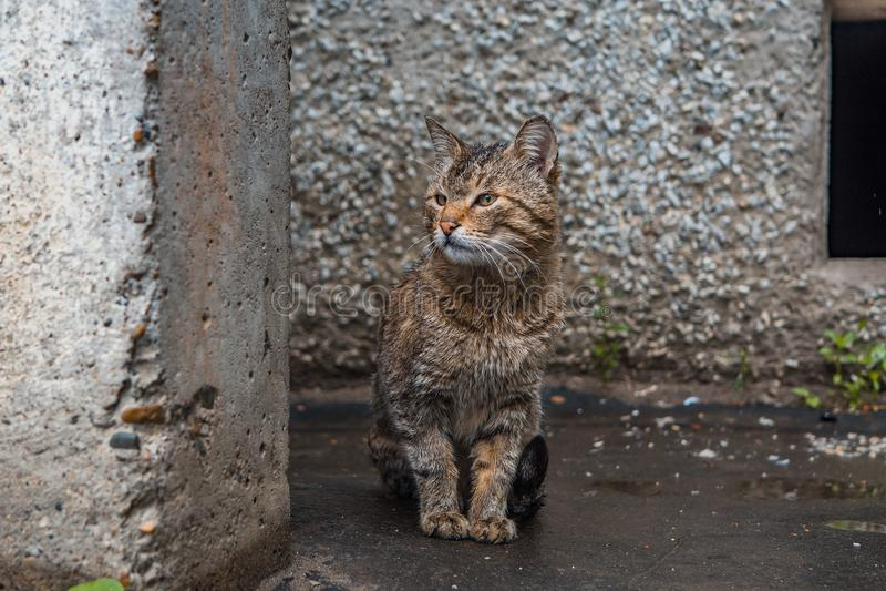 Przybłąkany kot outside obrazy stock