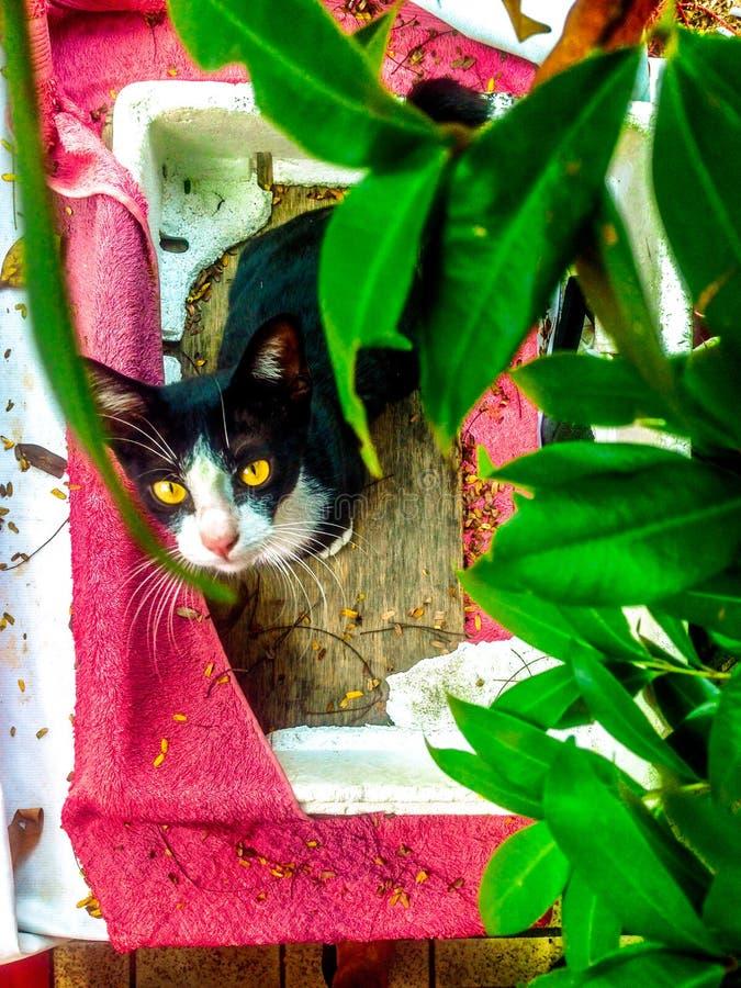 Przyb??kany kot szuka nowego dom obraz royalty free