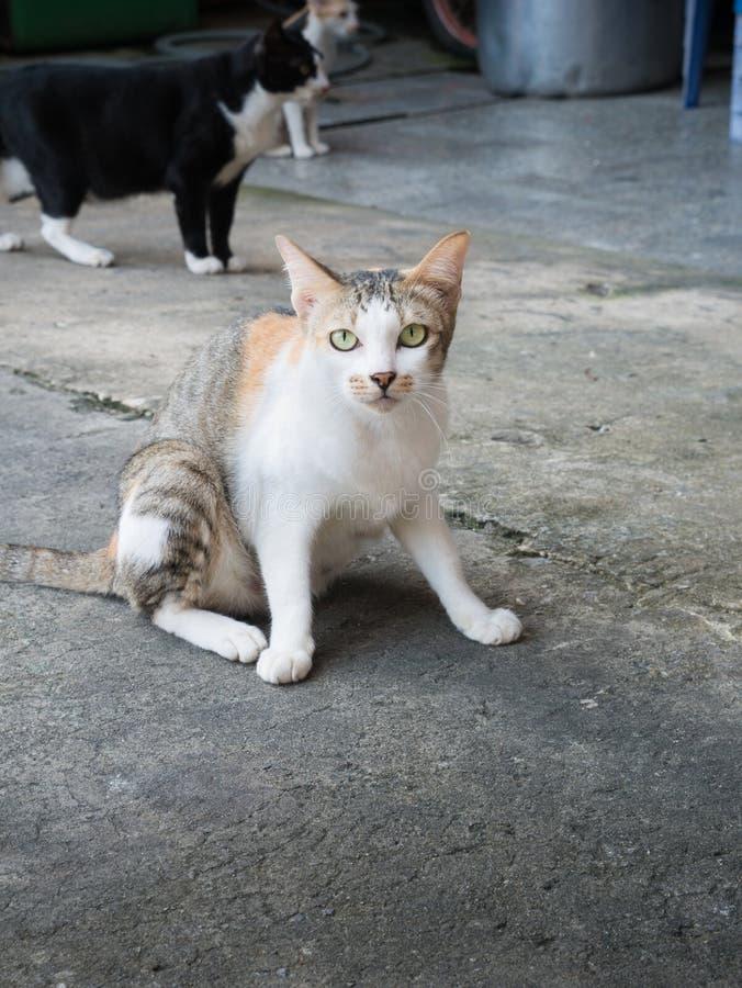 Przybłąkany kot w świątyni zdjęcia royalty free