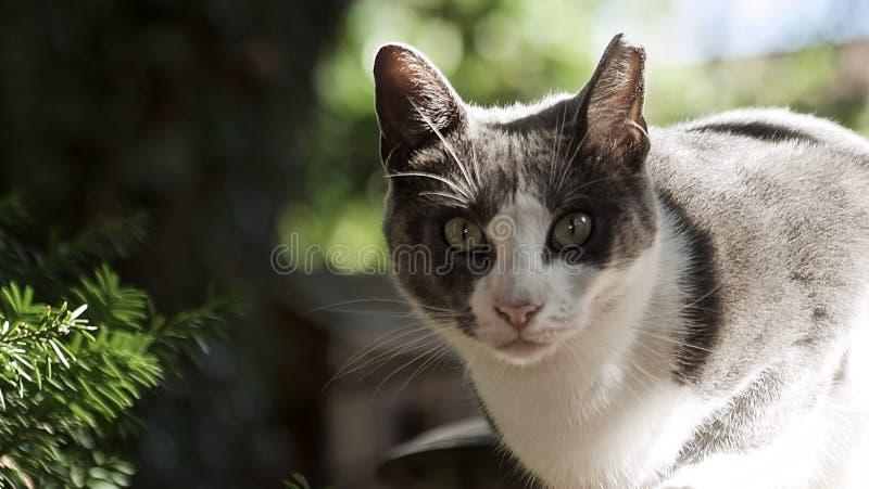 Przybłąkany kota życie fotografia royalty free