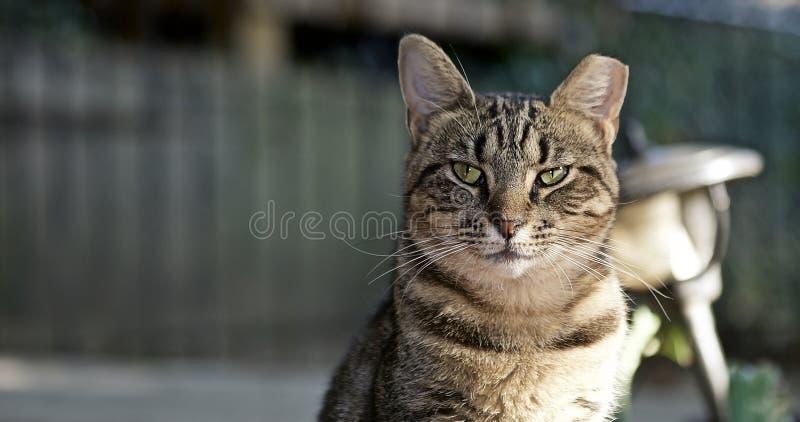 Przybłąkany kota życie zdjęcie royalty free