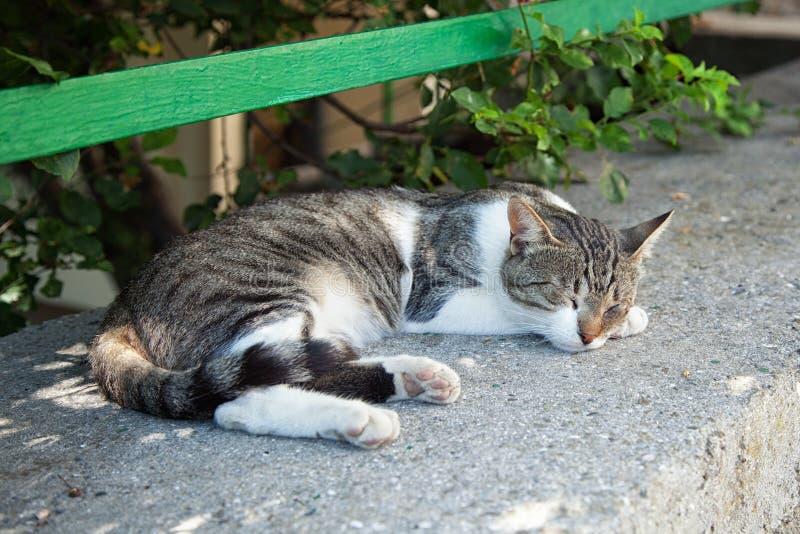 Przybłąkany kota dosypianie na ulicie fotografia royalty free