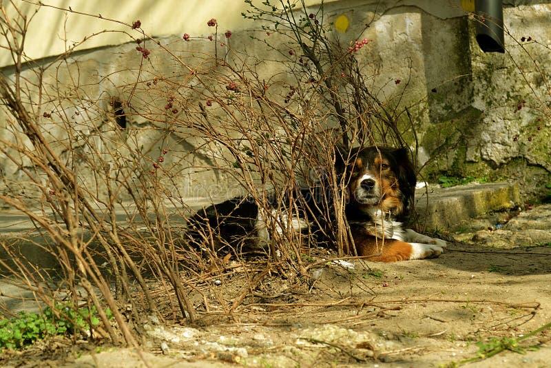 Przybłąkany pies obraz stock