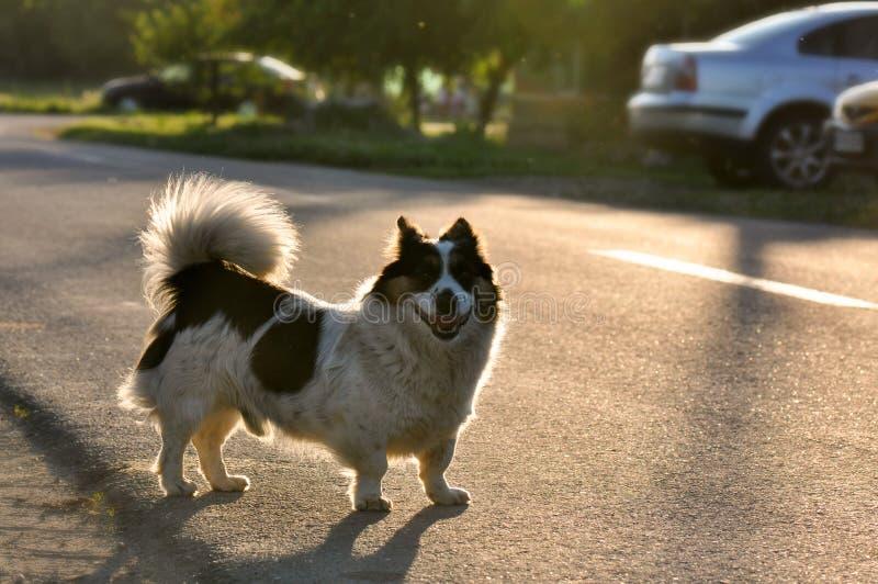 Przybłąkany pies zdjęcie stock