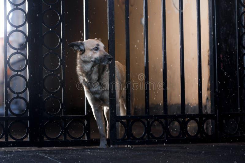 Przybłąkany pies w mieście Noc na ulicie obraz stock