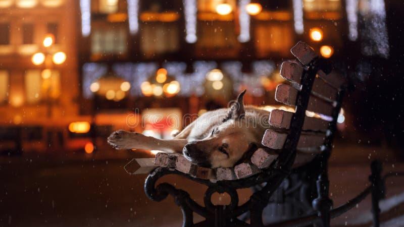 Przybłąkany pies w mieście Noc na ulicie obraz royalty free