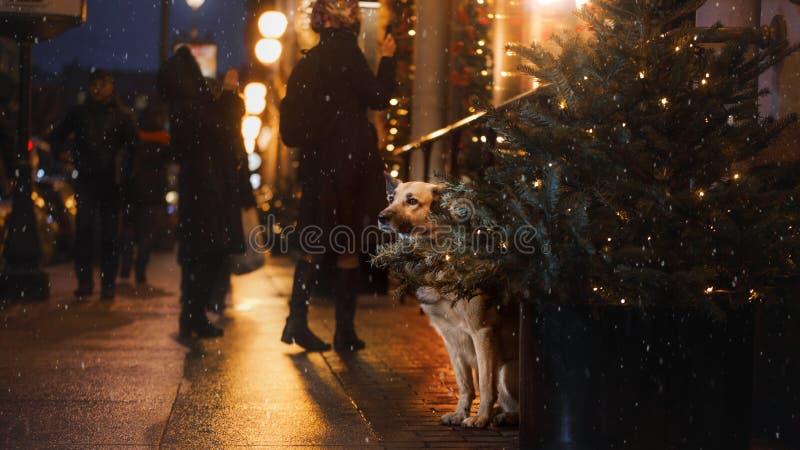 Przybłąkany pies w mieście Noc na ulicie zdjęcia royalty free