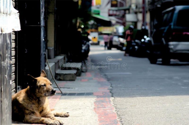 Przybłąkany pies w Tajwan śpi na ulicie w Taipei, Tajwan Tajwański ` s skop jest tropikalny i dużo nie śnieżny podczas zimy obraz royalty free