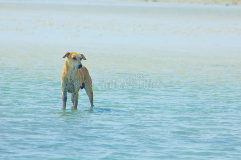 Przybłąkany pies Wiesza wokoło na plaży Cieszy się wodę zdjęcia stock