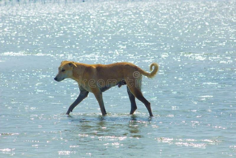 Przybłąkany pies Wiesza wokoło na plaży Cieszy się wodę zdjęcia royalty free