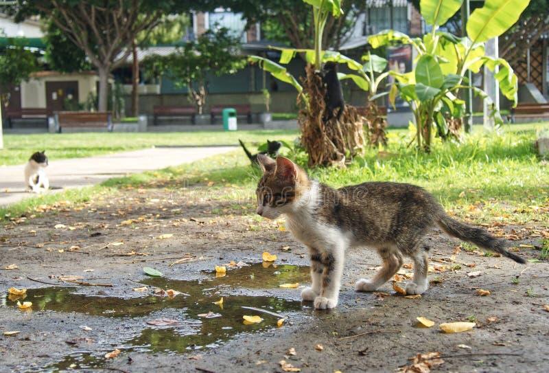 Przyb??kani koty zdjęcie royalty free