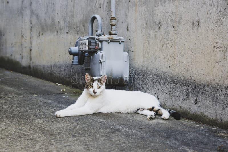 Przyb??kany bia?y kot relaksuje w alei w ci?gu dnia zdjęcia royalty free