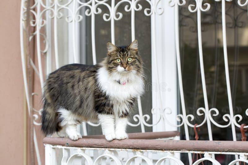 Przyb??kany kot Wykolejeniec, opustosza?y, samotny kot plenerowy, obraz royalty free