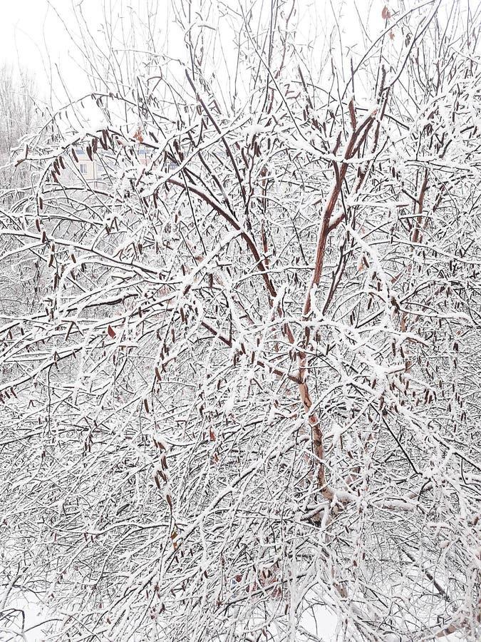 Przybycie zimny sezon rok Pierwszy śnieg spadał, zakrywający wszystko wokoło obraz stock