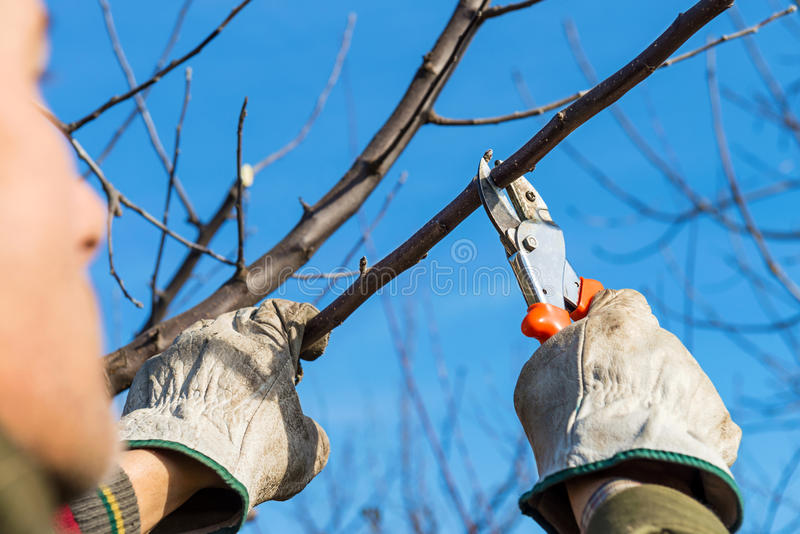 Przycinać drzewa obraz royalty free