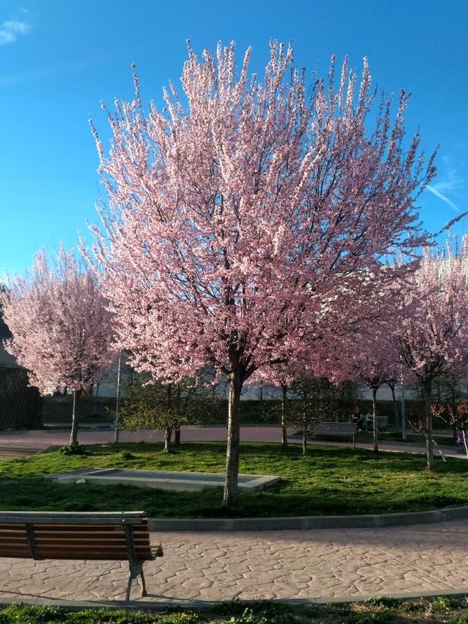 Przycina wiosnę fotografia royalty free