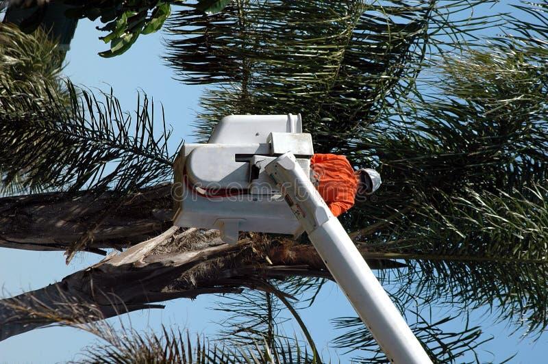 przycinarka drzew zdjęcia royalty free