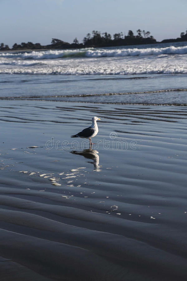 Przyglądający morze out fotografia stock