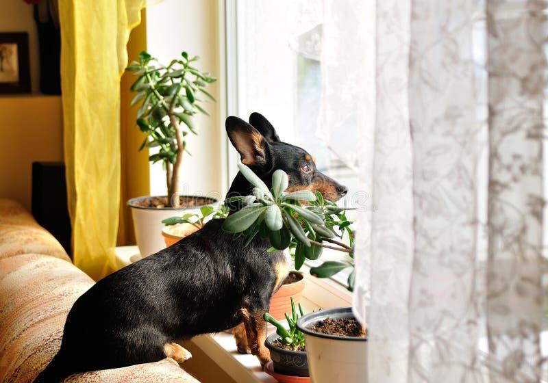 Przyglądający out okno! zdjęcie stock